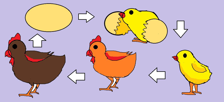 58 Koleksi Gambar Hewan Ayam Kartun Gratis Terbaru